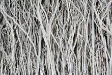 Dried Twigs Striped Wood Textu...