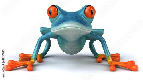 Photo Blue frog