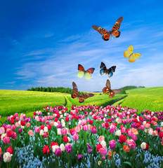 Plakat Field of colorful flowers and a butterfly group