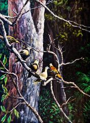 Fototapeta Ptaki Wildlife of the bird on the tree