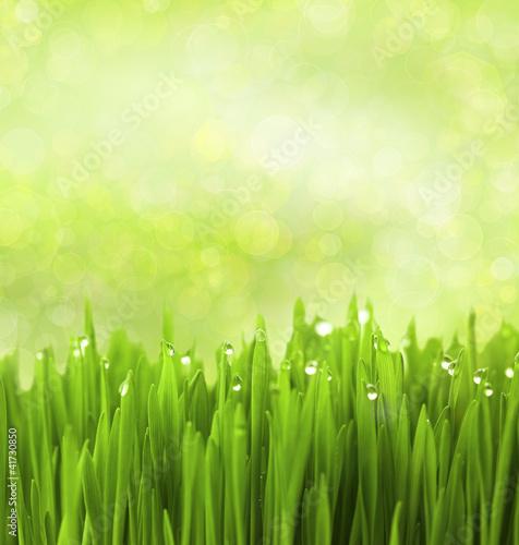 zielona-trawa-z-kropli-wody-na-abstrakcyjnym-tle-bokeh