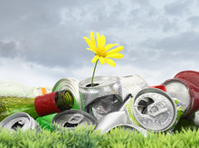 Garbage With Growing Daisy Under Storm Clouds