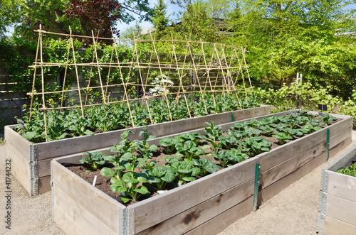 Stampa su Tela Kitchen Garden