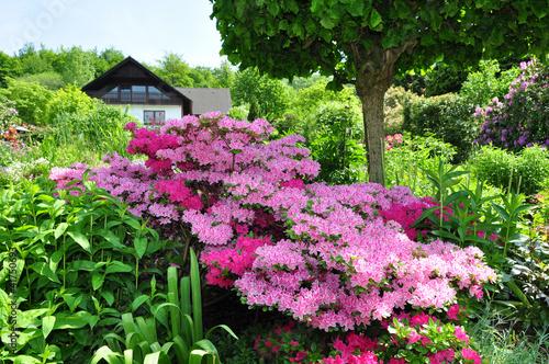 Papiers peints Azalea Azaleenstrauch im Garten
