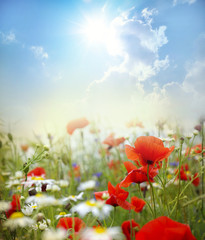 Panel Szklany Kwiaty Poppy flower
