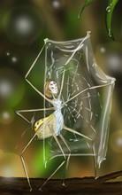 Sketch Of Weaver Fairy
