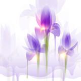 Iris flowers, vector illustration