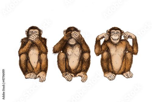 Fotografering  drei Affen (nichts sehen, hören, sagen)