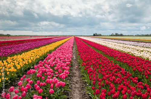Foto op Plexiglas Tulp pink, red and orange tulip field