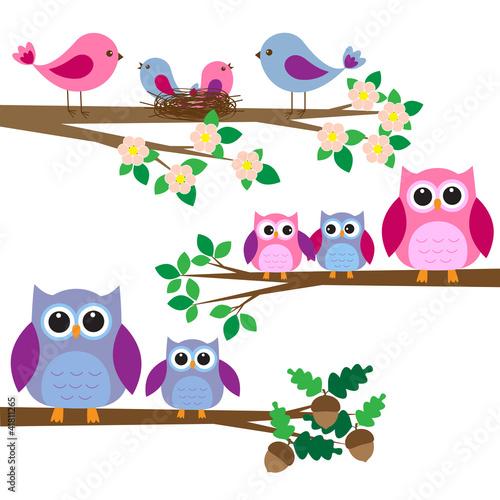 sowy-i-ptaki