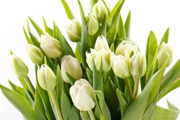 Obraz nice tulips