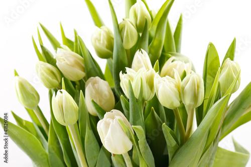Photo sur Aluminium Tulip nice tulips