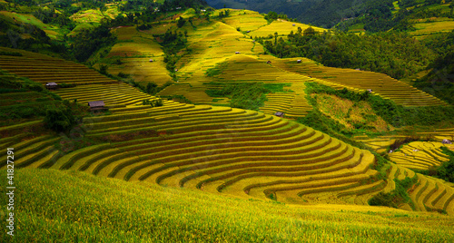 Valokuvatapetti Rice fields in Vietnam