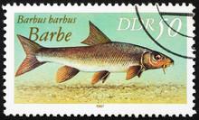 Postage Stamp GDR 1987 Common Barbel, Barbus Barbus