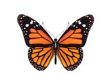 Digital Render Of A Monarch Bu...