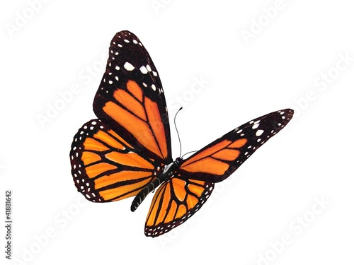 Poster Vlinder digital render of a monarch butterfly