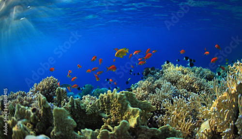Wall Murals Under water Coral reef