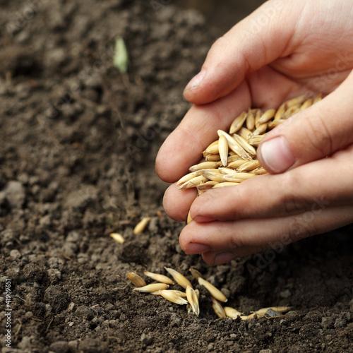 Stampa su Tela children hand sowing seed