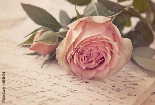 Fotobehang Roses Pink rose