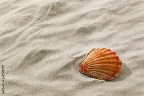Fotografía  Muschel an einem Sandstrand