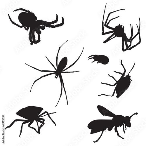 Vászonkép Bugs