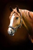painting portrait of a horse - 41976852