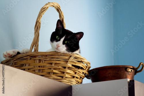 Naklejki koty   kot-kryty-po-odpoczynku-w-koszu