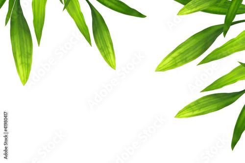 piekna-bambusowa-granica-opuszczac-biel