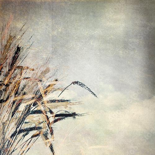 Fototapeta do kuchni Grunge paper texture. abstract nature background