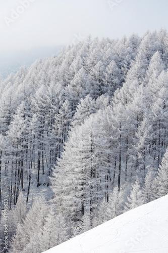 las-w-sniegu