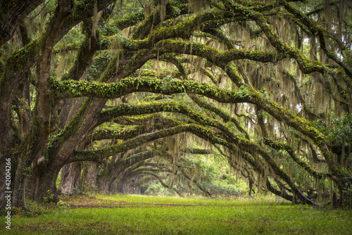 Spoed Fotobehang Bos Oaks Avenue Charleston SC plantation Live Oak trees forest