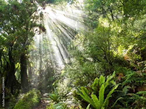 promienie-wiazki-swiatla-slonecznego-koryta-gesta-tropikalna-dzungle