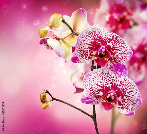 Naklejki o różnych zastosowaniach orchidea
