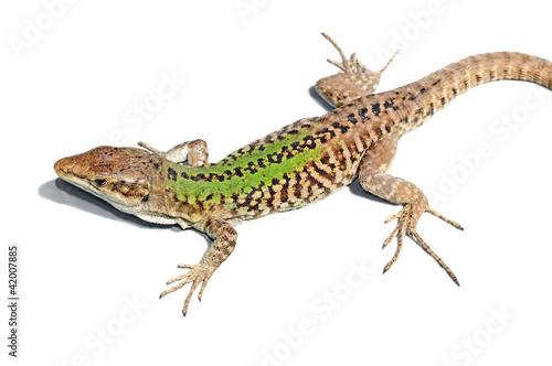 Photographie  close up of a lizard