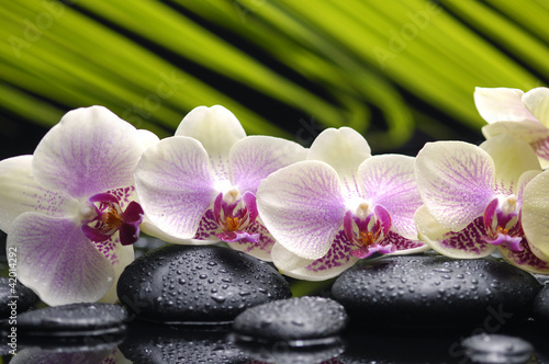 Tuinposter Spa Set of branch orchid with stones- palm leaf background