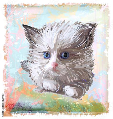 portret-puszysty-kotek-o-niebieskich-oczach
