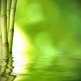 troncos de bambú verde sobre el agua