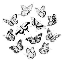 Flying Black & White Butterflies