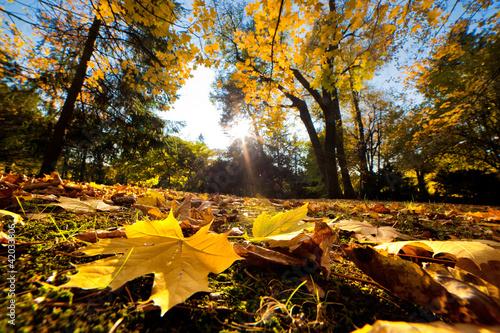 park-w-jesieni