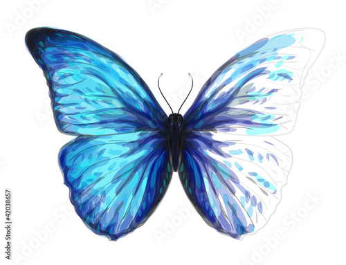 Valokuva  Butterfly  Morpho Anaxibia. Unfinished Watercolor drawing imitat