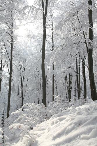 zima-bukowy-las-na-sklonie-na-mroznym-pogodnym-ranku
