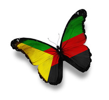 Azawad Flag Butterfly, Isolate...
