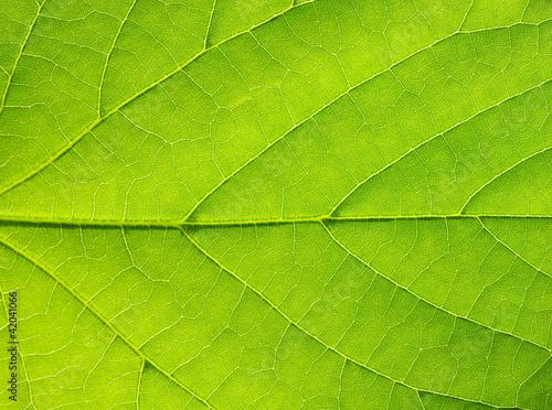 Fototapeta liście   lisc-w-ujeciu-makro