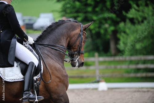 Foto op Canvas Paardrijden Dressurreiten, Dressurpferd
