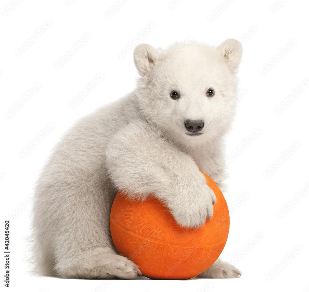 Polar bear cub, Ursus maritimus, 3 months old, playing with ball