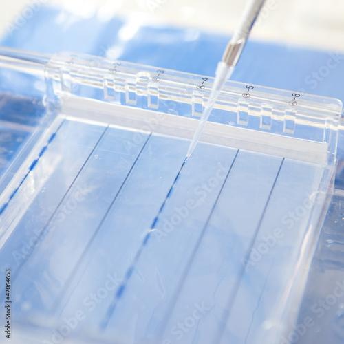 Fotografie, Tablou  loading a sample into a gel for electrophoresis
