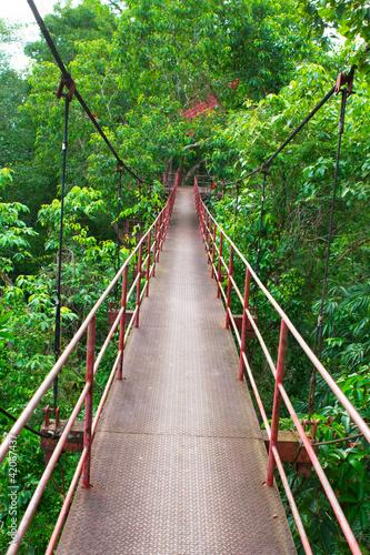 Fototapety do przedpokoju   wiszacy-drewniany-most