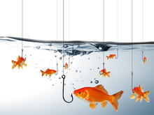 Fische Vor Angelhaken