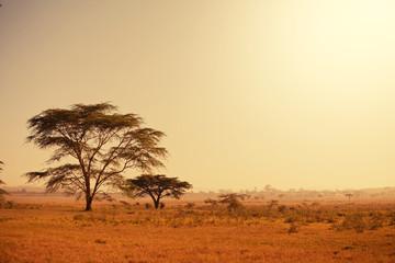 Fototapeta na wymiar African landscapes