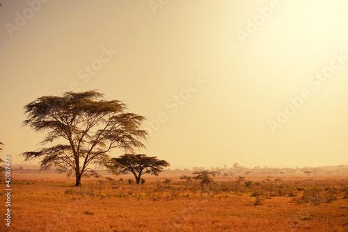 Obrazy na płótnie Canvas African landscapes